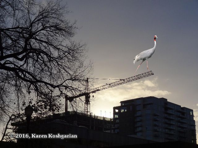 A crane photoshopped onto the boom of a construction crane silhouetted against the Portland Oregon skyline