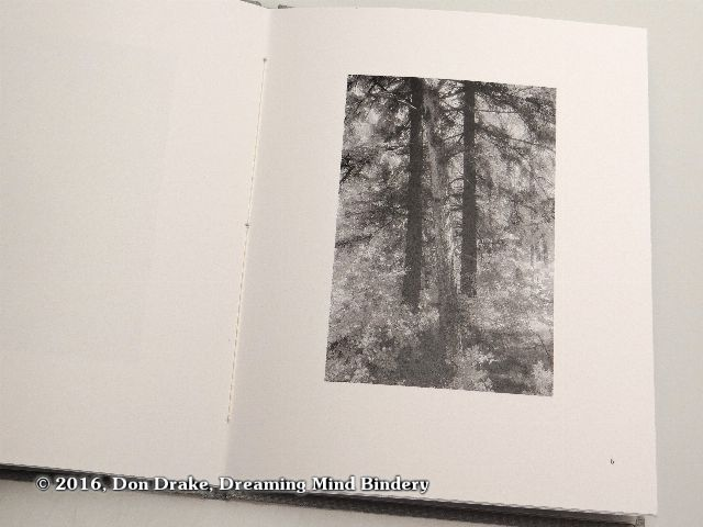 'Leaning Tree', image 6 in Kate Jordahl's and Don Drake's One Poem Book, Here